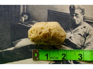 """MEDIUM Natural Sea Sponge (brown) - 2.0""""-2.5"""""""
