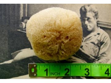 """LARGE Natural Sea Sponge (brown) - 2.5""""-3.0"""""""
